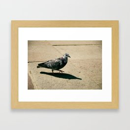 pigeon Framed Art Print