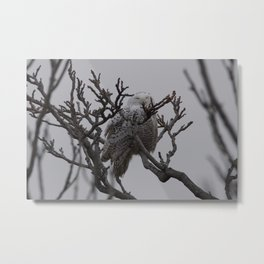 Snowy Owl in Tree Metal Print