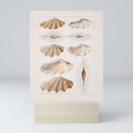 François Jean-Baptiste Ménard de la Groye (Le Mans 1775 - 1827 Saint-Samson) Sea Shells, c.1807-26 Mini Art Print