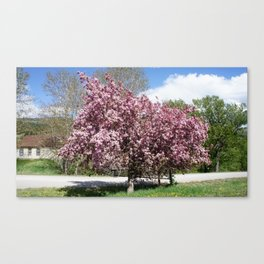 Pink Cherry Tree Canvas Print