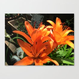 Tiger Lily Cluster Canvas Print