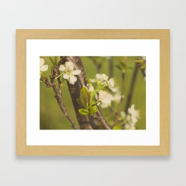 Green blooming tree and the bee Framed Art Print