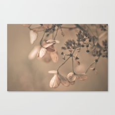 Daydream in Pink Canvas Print