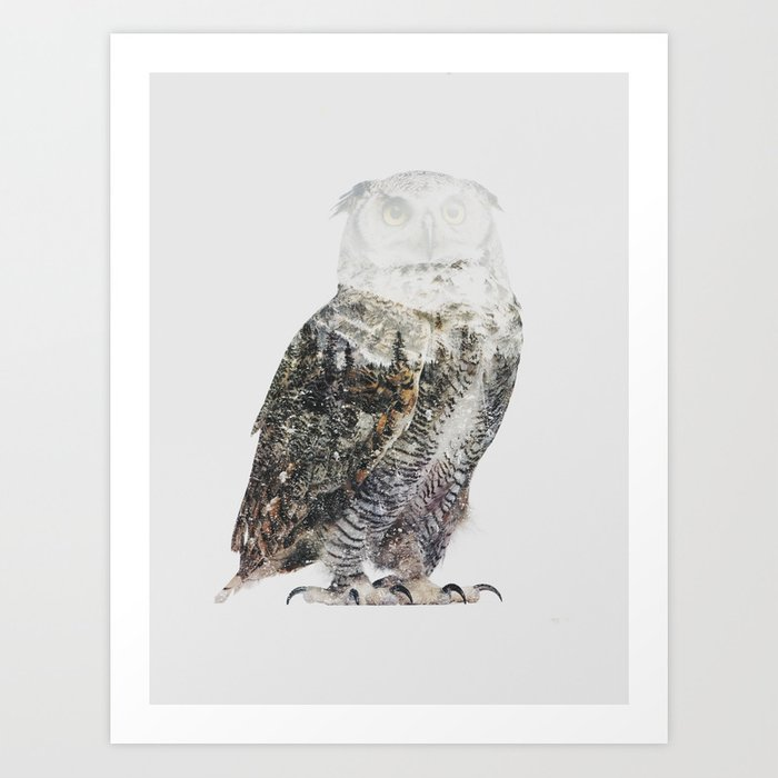 Discover the motif ARCTIC OWL by Andreas Lie as a print at TOPPOSTER