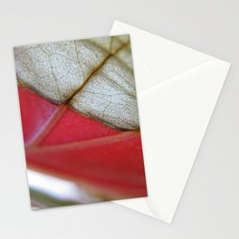 Begonia 412 Stationery Cards