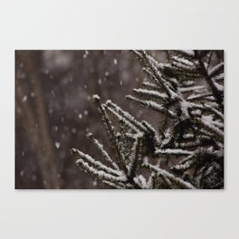 Snow Upon the Branches (Color) Canvas Print