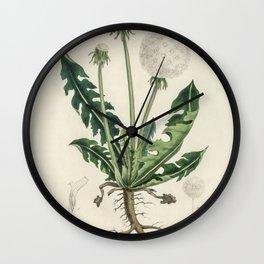 Leontodon taraxacuma  from Medical Botany (1836) by John Stephenson and James Morss Churchill Wall Clock