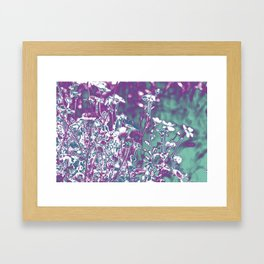 manipulated photo of daisy flowers in the field with gradient color from blue to pink Framed Art Print