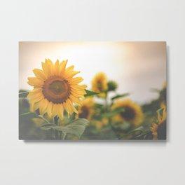 After the Rain - Sunflower Field II Metal Print
