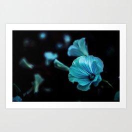 Night Flowers Art Print