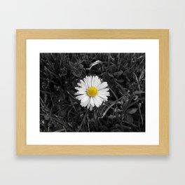 The Lone Daisy. Framed Art Print