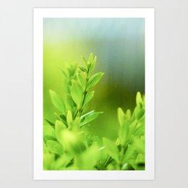 Green Harmony Art Print