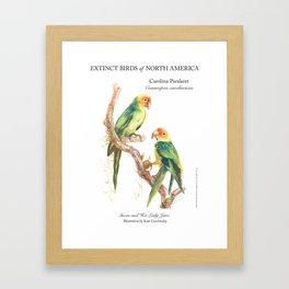 Extinct Birds: Carolina Parakeet Framed Art Print