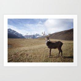 Caribou On The Tundra Art Print