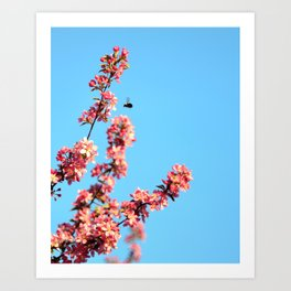 Pink flowers With Bee Art Print