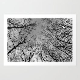 Flying branches, black and white Art Print