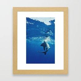 Shark Swimming Framed Art Print