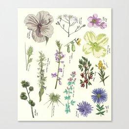 Scientific illustration, plants, flowers, flower, plant Canvas Print