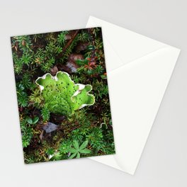 Lichen Light Stationery Cards