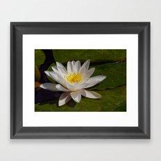 The Last Lily Framed Art Print