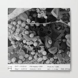 Nocopseudobacillum Metal Print