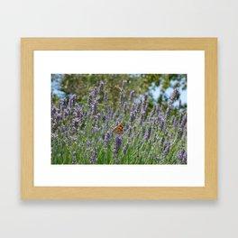 Lavender and Orange Butterfly Framed Art Print