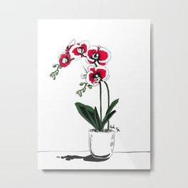 Moth Orchids Metal Print