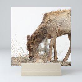Watercolor Elk Calf 01, Estes Park, Colorado, Scruffy Mini Art Print