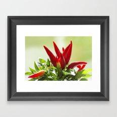 Chili peppers on the vine Framed Art Print