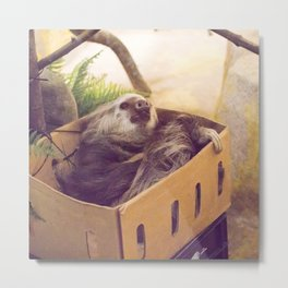 Sloth in a Box Metal Print