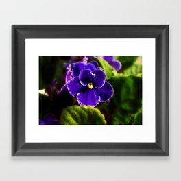 African Violet Framed Art Print