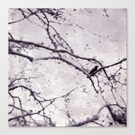 Winter Crow Canvas Print