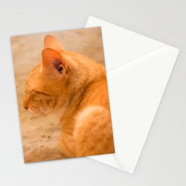 Orange Cat Is Resting On The Terrace  #decor #society6 #homedecor Stationery Cards