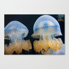 Double Blue Jellyfish - Underwater Photography Canvas Print