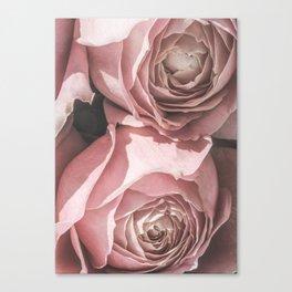 Powdery Pink Roses Canvas Print