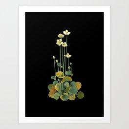 Parnassia Palustris Mary Delany Delicate Paper Flower Collage Black Background Floral Botanical Art Print