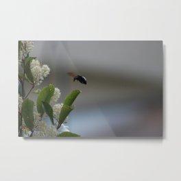 Carpenter Bee Landing Metal Print