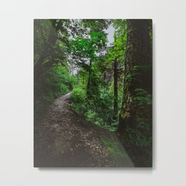 Trailblazing Metal Print