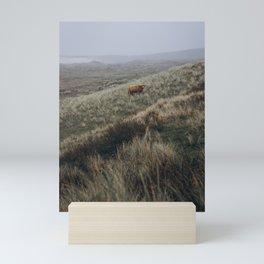 Scottish Highlander ll | Dutch dunes | Nature photography print | Holland | Wall art Art print Mini Art Print