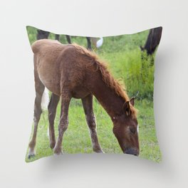 Wild Spanish mustang colt Throw Pillow