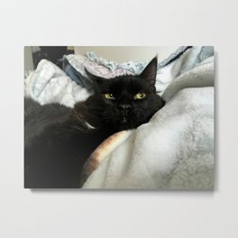 THE CAT WITH NO NAME M* Metal Print