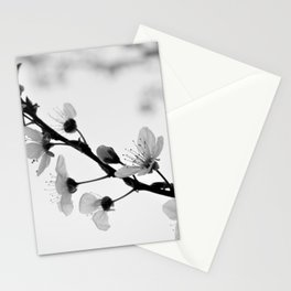 Black And White Blossoms Stationery Cards
