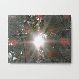 Sunlight through white blossoms Metal Print