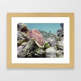Red Nudibranch Framed Art Print