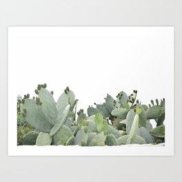 Cactus of Kefalonia Art Print