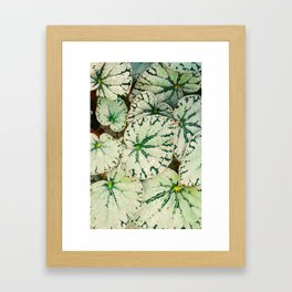 Begonia Leaf Framed Art Print