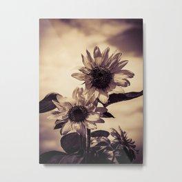 Post card Sunflowers Metal Print