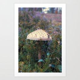 Parasol Mushroom Art Print