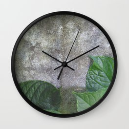 Urban Plant hydrangea leaves on concrete wall Wall Clock