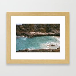 Cockroach  Framed Art Print